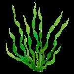 Spirulina - The Microgranule Company - Laboratoires Activa